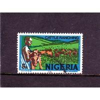 Нигерия. Ми-276.Разведение крупного рогатого скота - темная-литография.1976.