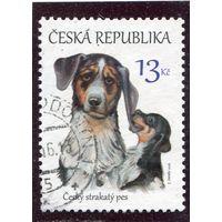 Чехия. Собака
