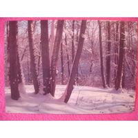 Открытка СССР Зимний лес 1986г. фото Фото В.Салеева