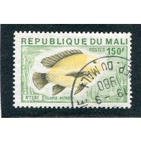 Мали. Рыба Тилапия  140fr