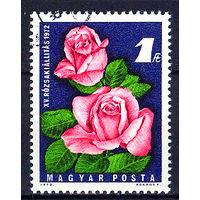 1972 Венгрия. Фестиваль роз