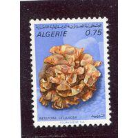 Алжир. Морская фауна