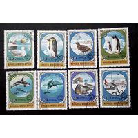 Монголия 1980 г. Фауна. Исследование Антарктики. полная серия из 8 марок #0032-Ф1