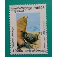 Камбоджа.1996.морские котики
