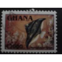 Гана 1995 стандарт, рыба