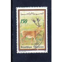 Тунис.Ми-1219. Барбэри Олень (Cervus ELAPHUS Barbarus). Серия: Фауна и флора.1990.