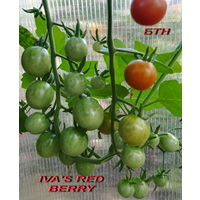 Семена томата IVA'S RED BERRY