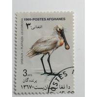 Афганистан 1989. Птицы