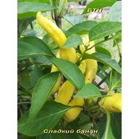 Семена перца Сладкий Банан  (Sweet Banana)