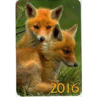 Календарик 2016. Лисята