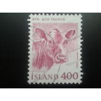 Исландия 1982 корова