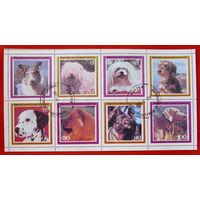Экваториальная Гвинея. Собаки. ( 8 марок ) 1978 года.