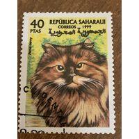 Сахара 1999. Домашние кошки. Poras Carey. Марка из серии