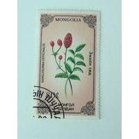 Монголия 1985. Флора. Растения.