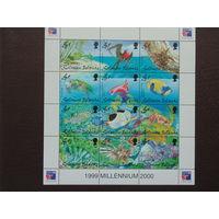 Соломоновы острова. Меланезия. 1999г. Морская фауна.