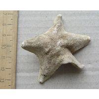 Морская звезда 3
