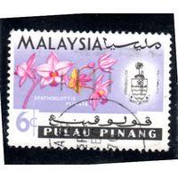 Малайзия. Пулау Пинанг. Ми-111. Орхидея plicata.1965.