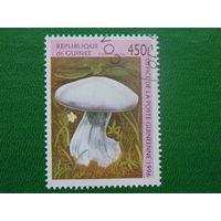 Гвинея 1996г. Грибы.