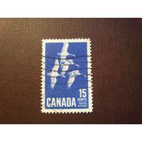 Канада 1963 г.Канадский гусь.