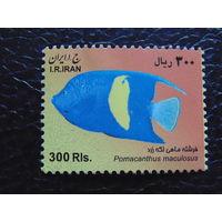 Иран. Фауна.