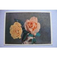 Самсонов Г., Розы; 1957, подписана.