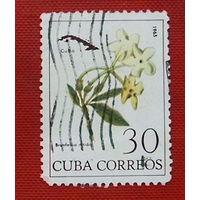 Куба. Цветы. ( 1 марка ) 1965 года.