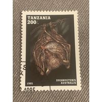 Танзания 1995. Летучие мыши. Syconycteris Australis