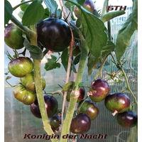 Семена томата Королева Ночи