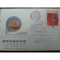 1998 хмк кошка прошло почту