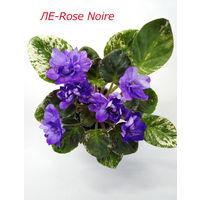 Фиалка ЛЕ-Rose Noire  2017 - св.лист