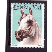 Польша. Mi:PL 3193. Арабская лошадь (Equus ferus caballus) Серия: Лошади. 1989.