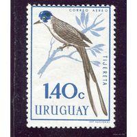 Уругвай. Уховертка. Из серии Птицы