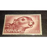Испанская Сахара 1964 Фауна Белка чистая марка