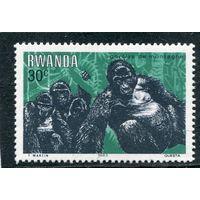Руанда. Фауна. Горилла
