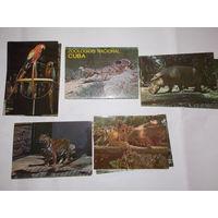 Набор открыток Национальный зоопарк Куба