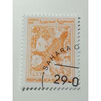 Сахара 1998. Ящерица
