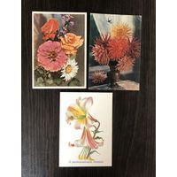 Открытки Цветы 1958-1959 год Цена за все