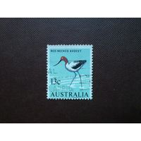 Австралия 1966 г.Круглоносая  Шилоклювка.