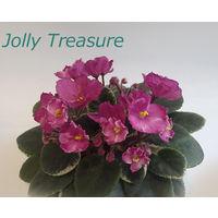 Фиалка полумини Jolly Treasure - детка (фото в лоте)