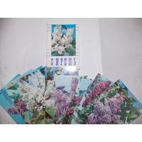Набор открыток СССР Сирень (2)
