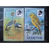 Лесото 1981 Птицы**