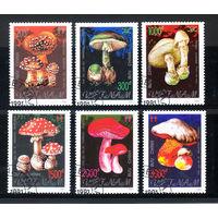 1991 Вьетнам. Ядовитые грибы