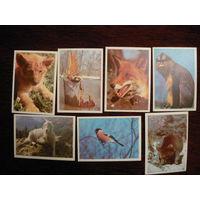 Карманые календарики:Животные