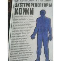 Экстерорецепторы кожи