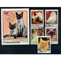 Йемен 1970г. кошки, 5м. 1 блок