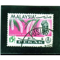 Малайзия. Перак. Ми-120. Ринхостилис ретуза.1965.