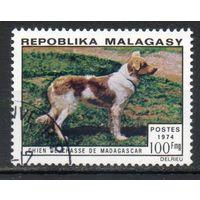 Собаки Мадагаскар 1974 год 1 марка