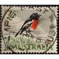 Австралия. Птицы.
