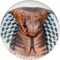 """Острова Кука 5 долларов 2017г. Третья монета серии  Великолепная жизнь: """"Королевская Кобра"""". Монета в капсуле; подарочном футляре; сертификат; коробка. СЕРЕБРО 31,135гр.(1 oz)."""