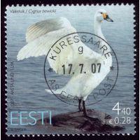 1 марка 2007 год Эстония Лебедь 580